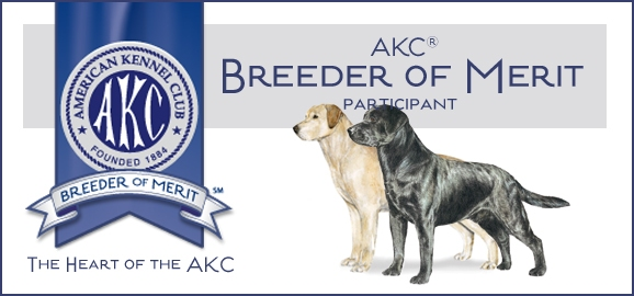 Labs to Love AKC Breeder of Merit