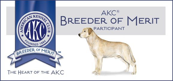 AKC Breeder of Merit Labs To Love