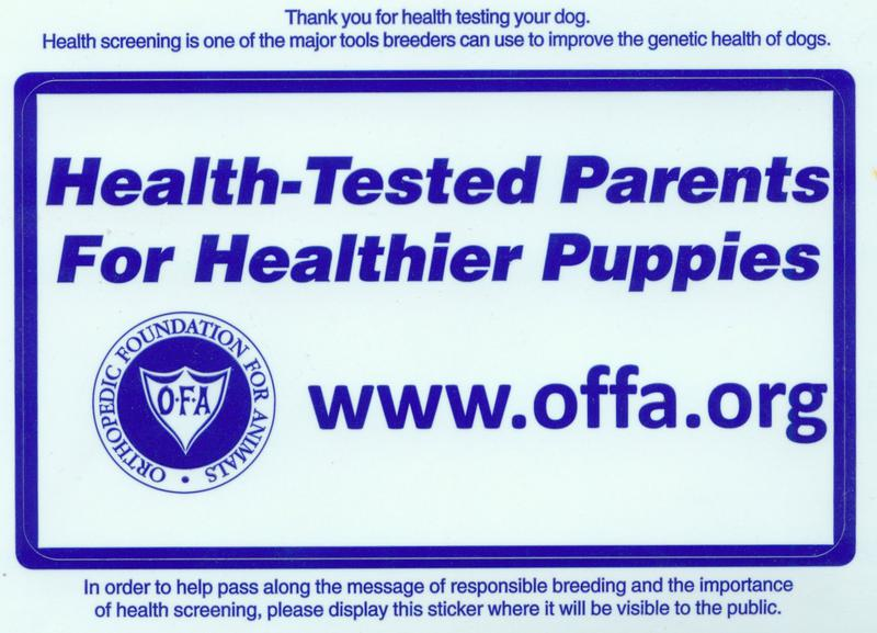 Labs To Love Health Tested Lab parents to lab pups